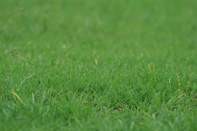 Как выбрать посеять траву на участве для газона студия Виденфлора